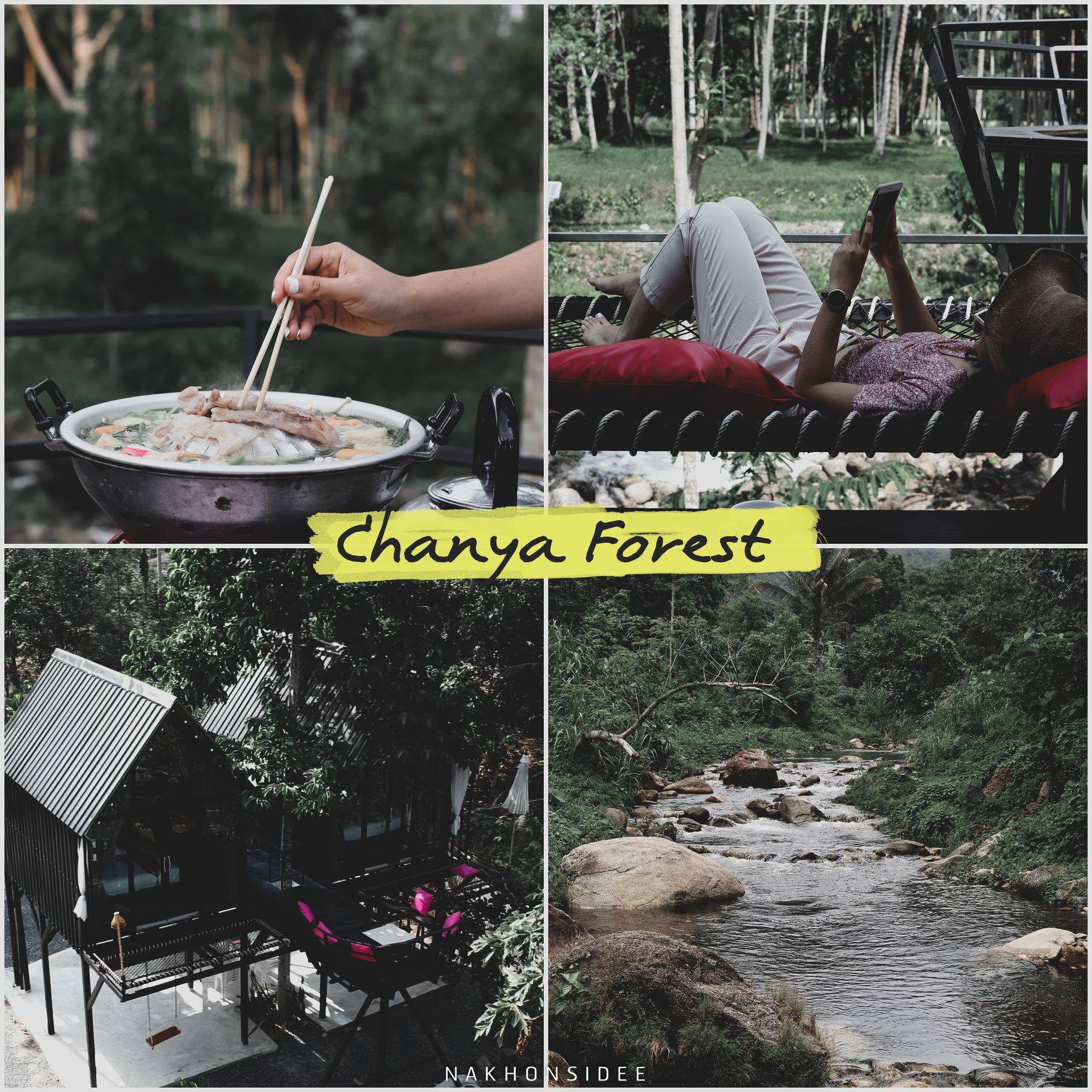 Chanya-Forest-ที่สุดแห่งที่พักริมลำธาร-เพราะอยู่ติดริมลำธารแบบที่สุด-น้ำใสกิ๊งยิ่งกว่าน้ำตกอีกกก-ปิ้งย่างน้ำจิ้มหร่อยมวากก-10/10 คลิกที่นี่ ช้างกลาง,นครศรีธรรมราช,วิวหลักล้าน,กลางป่า